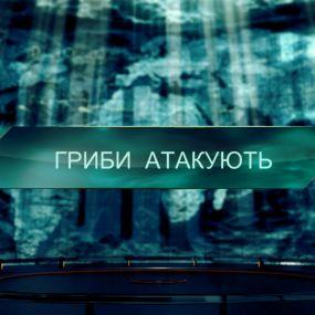 Грибы атакуют – Затерянный мир. 2 сезон. 120 выпуск