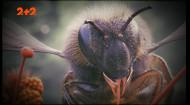 Невідомі властивості бджіл