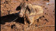 Дмитрий Комаров с волонтерами спасают животных из смертельной грязевой ловушки