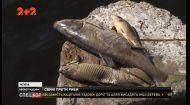У водосховищі на Кіровоградщині масово загинула риба