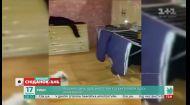 Смешные видео домашних любимцев от зрителей Сніданку з 1+1