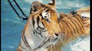 Мир наизнанку 10 сезон 14 выпуск. Бразилия. Особняк с бассейном для тигров и опасные исследования кайманов