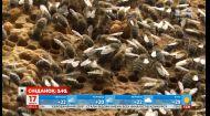 Холодная весна бьет по пчелам: хватит ли всем майского меда