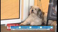 Куда закон разрешает и запрещает ходить с домашними животными