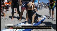 Хвостаті підкорювачі хвиль: у США відбувся незвичайний фестиваль серферів