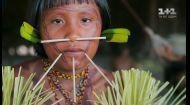 Ритуал посвяти дівчаток племені Яномамі в доросле життя