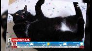 В США кошка притворилась мертвой, чтобы избавиться от надоедливой хозяйки