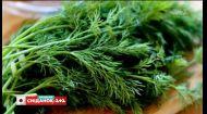 Топ-5 самых полезных видов зелени