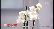 Орхідея: як правильно обрати та якого догляду вона потребує – експерт Павло Дем'янчук