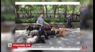 Папараці підловили Деніела Редкліффа на вулицях Нью-Йорка в компанії десятка песиків