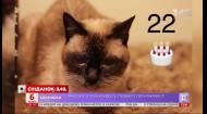 Старше королевы Великобритании: в гостях Сніданка 22-летняя кошка Алиса