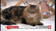 Кот, который спас хозяйку от самоубийства: история Марии и ее друга Кекса