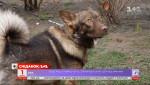Як пес-безхатько Малиш став вірним другом та врятував життя своїй господарці