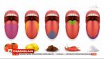Как работают вкусовые рецепторы человека