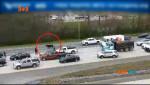 Корова заблокувала рух на швидкісному шосе у Вірджинії