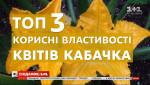 Для імунітету, зору та очищення організму: корисні властивості квітів кабачка