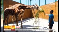 Мій путівник. Курорти Приазов'я – найкращий зоопарк України та унікальні лікувальні грязі