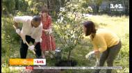 Стася Ровінська, Вова Рабчун та Тоня Лесик посадили у столичному ботанічному саду горобину