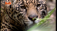 Секрет выживания в джунглях без припасов и снаряжения