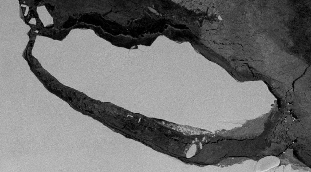 Розкол гігантського айсберга виявив невідомих істот віком понад 120 тисяч років