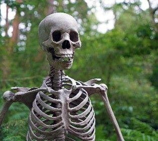 Яка це кістка? - гра від 2+2