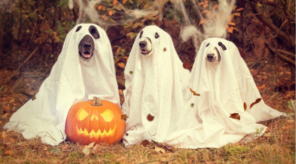 Почему празднуют Хэллоуин?