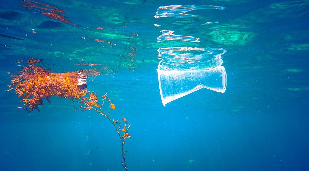 Мешканці океанських глибин харчуються пластмасою