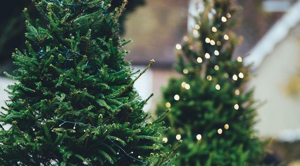 Искусственная елка: непредвиденная опасность
