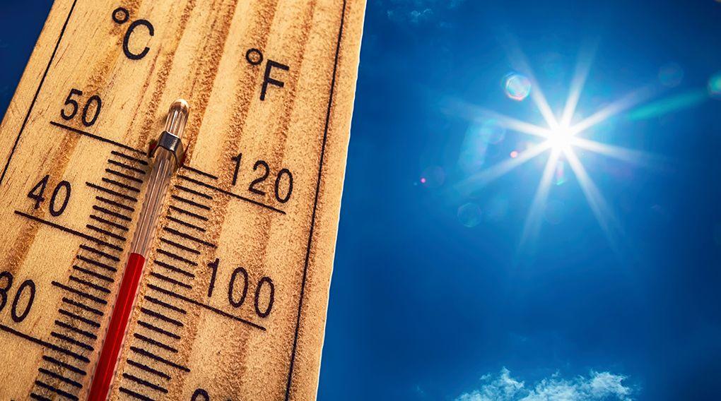 Грудень у Києві побив рекорд по теплоті за останні 100 років