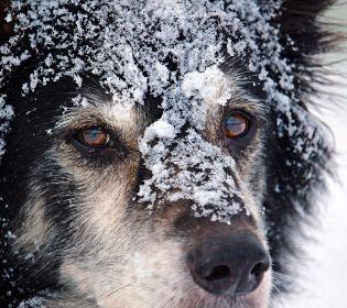 Щасливе повернення: поліція знайшла собаку, якого викрали в новорічну ніч