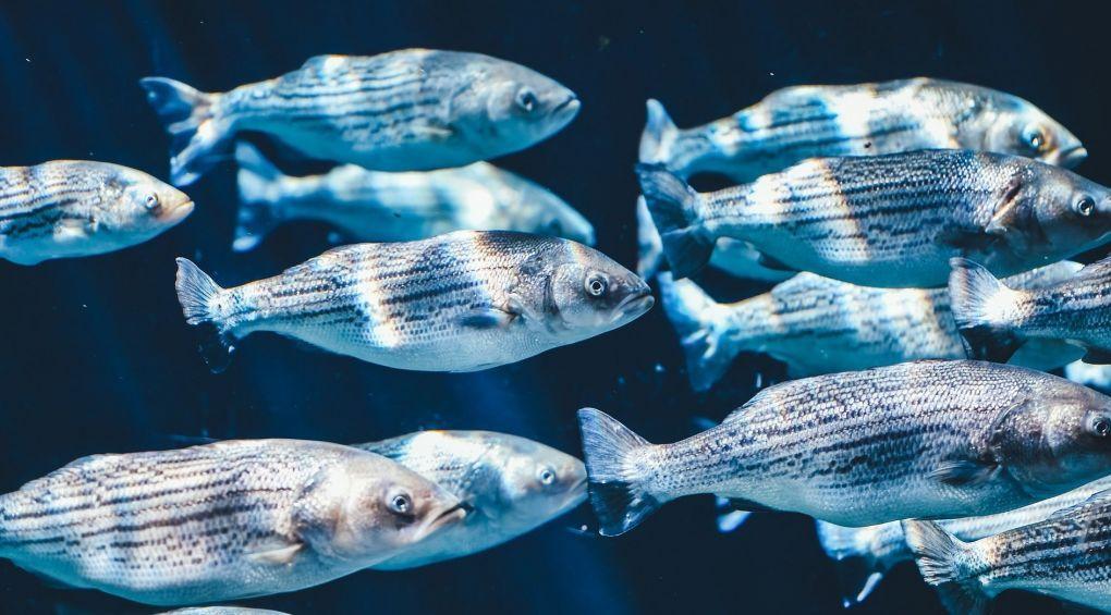 35% риби у світі виловлюється дарма