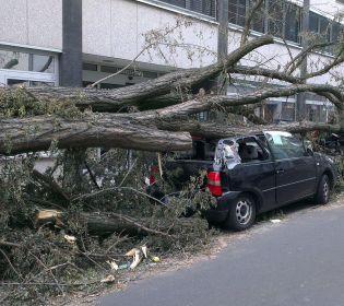 У Львові дерево розтрощило дві автівки