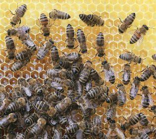 Комунальників у Дніпрі тероризують бджоли