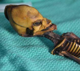 Атакамський гуманоїд знову здивував світ