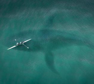 5 небезпечних морських чудовиськ, що існували насправді