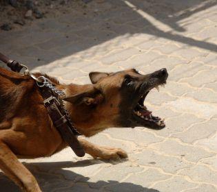 У Києві пес бійцівської породи загриз бульдога і поранив його власників