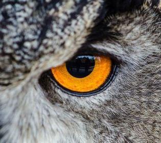 Як бачать світ тварини