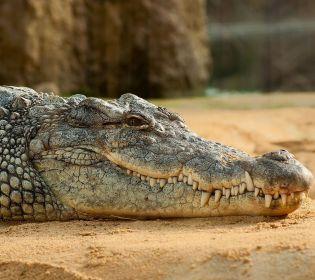 Французький пенсіонер тримає у себе зоопарк із 400 рептилій