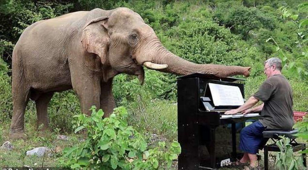 Англичанин играет на фортепиано для слонов в джунглях