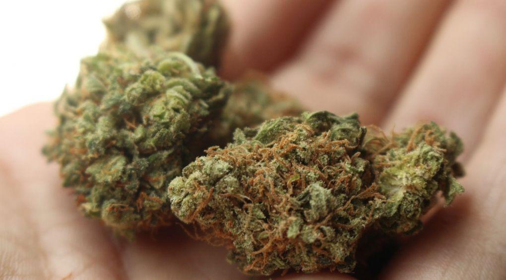 У Канаді шалені черги за марихуаною