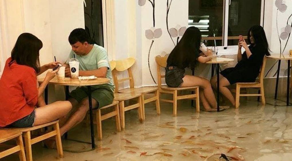 Во Вьетнаме открылось кафе, где вместо пола – вода и рыбы