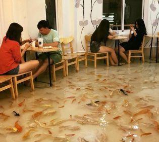 У В'єтнамі відкрилося кафе, де замість підлоги – вода і риби