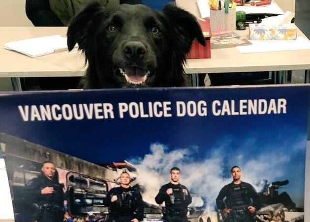 """Поліція Ванкувера випустила календар з чотирилапими """"напарниками"""""""