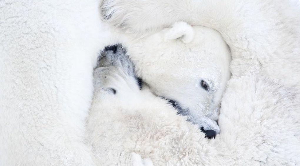 Чтобы сделать уникальные фотографии, фотограф провела 117 часов в 50-градусный мороз