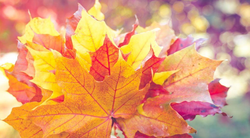 Афиша 17 – 18 ноября: куда пойти и что посмотреть?