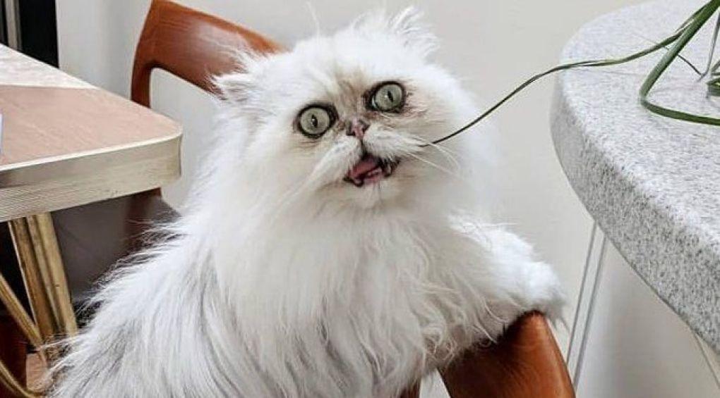 Самый страшный кот в мире поразил пользователей Интернета