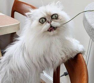 Найстрашніший кіт у світі вразив користувачів Інтернету