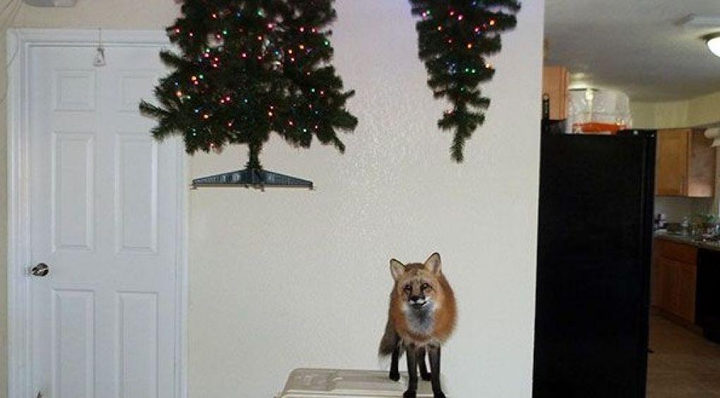 Фотодобірка: як захистити новорічну ялинку від домашніх тварин