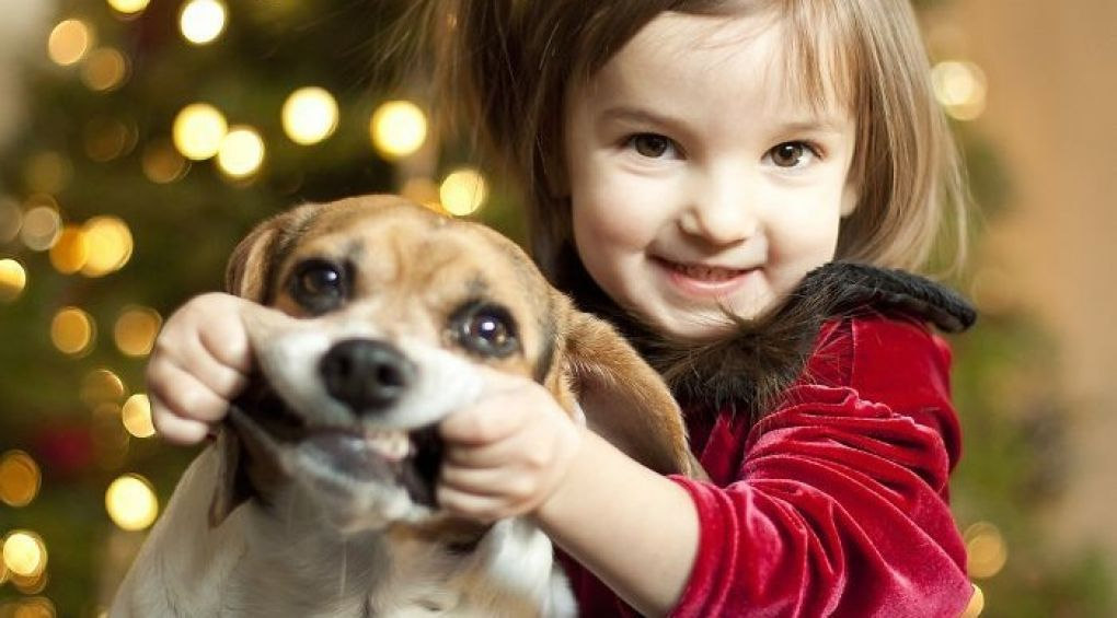 Тварини, які терпіти не можуть Різдво і Новий рік