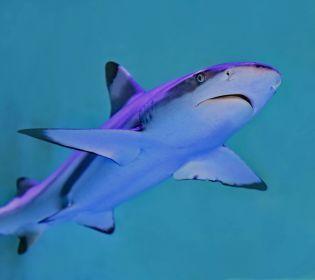 Рибалка дав відсіч акулі, що схопила його за ногу